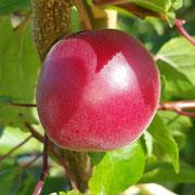 Abricot-prune
