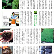 ・【青汁通信】掲載 「無農薬栽培・オオバ(アオジソ)②」