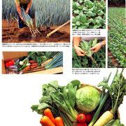 ・【婦人画報】掲載 「あゆみの会の有機ミネラル野菜②」
