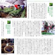 ・【青汁通信】掲載 「無農薬栽培・オオバ(アオジソ)③」