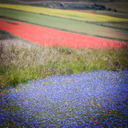 Castelluccio di Norcia - la famosa fioritura dei campi coltivati a lenticchie
