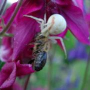 und hat die Biene ausgesaugt