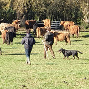 troupeau de la ferme de la millanchere