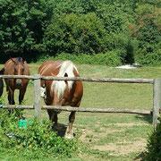 chevaux de la ferme de la millanchère