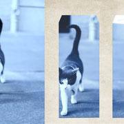 パリ「パリの街中の猫」朝に出会った美しい顔をしたネコの足取りがとてもしなやかだった。凛々しい空気を纏っていた。
