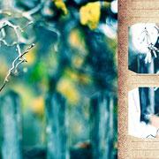 グラーツ郊外「寒い冬の散歩道」もう少し歩いて森の方から帰ろうというので遠回りして歩く。空気を吸い込んで、真っ白い息をはいたら、目の前に面白いフォルムの枝。