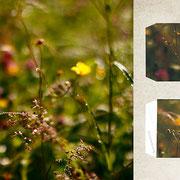 グラーツ郊外「春が来た朝の庭」庭の花々に降りた水滴が、朝陽にかがやいて美しくて、このまま太陽の動きが止まればいいのにと思った。