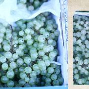 パリ「サンジェルマン通りの白ブドウ」透明なエメラルドグリーンがひたすらみずみずしかった。南の遠浅の海色をしていた。宝石みたいだった。
