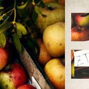 グラーツ「カイザヨゼフ市場のりんご屋台」初冬に実るりんごの屋台。上からかぶさっているのは宿り木。この季節ならではの植物。
