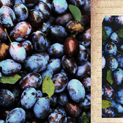 グラーツ郊外「朝摘みプラム」2年ごとに実プラム。朝に摘まれるプラムの果肉が内側から発光しているように美しかった。果肉はミキサーにかけられ、甘く煮てジャムに。