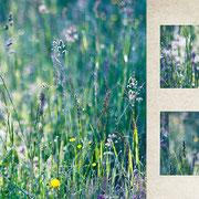 グラーツ郊外「春が来た朝の庭」長い厳しい冬の終わりの日。気温があがり太陽が射し、美しい春が来た日にそこにいられた喜び。