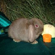 купить крольчонка в Туле
