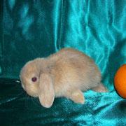 питомник кроликов Весна