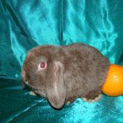 питомник кроликов Весна Тула