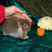 Кролики в туле карликовые