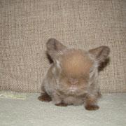 крольчонок милый