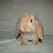 купить кролика в Туле