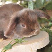 питомник кроликов Весна Город тула