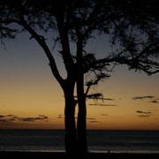 SURFARI NICARAGUA 2.007