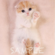 「猫生活」表紙に掲載