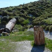 Versteinerter Wald Απολιθωμένο δάσος
