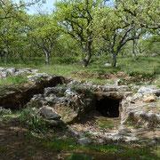 Walloneneiche Wald (Minoische Nekropole Armeni)