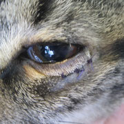 Nach der Operation: Das Augenlid liegt in seiner physiologischen Stellung dem Auge an.