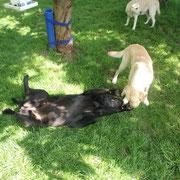 Buck und Talea