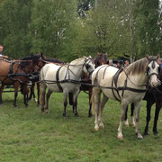 présentation d'attelage à 6 chevaux