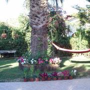 Villa Xenos - Studios & Apartments , Kalamaki , Zakynthos Island , Greece.2