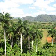 Obst- und Tabakplantagen prägen im Landesinneren die Landschaft.
