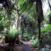 ... durch dichten Regenwald zu den Cathedral Caves