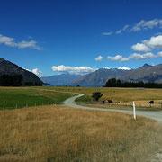 In den Catlins, der Südspitze von NZ.
