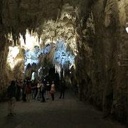 Tausende von Glühwürmchen hängen an den Höhlendecken.