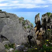 Pancake Rocks bei Greymouth (Südinsel Westküste)