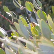 ❦ Jojoba and bee