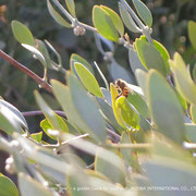 ♔ Jojoba and bee