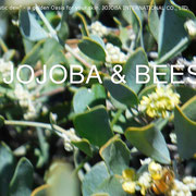 ❦ Jojoba and bee