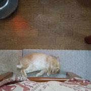 2012/3/27 ママの足元なら安心してゴロンと寝られるよ。生後3カ月