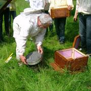 Bienen rein und Mittelwände drauf
