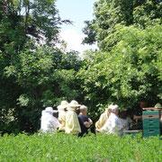 Praktische Übungen am Bienenvolk