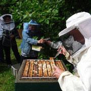 Ob der Honig schon reif ist?