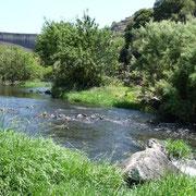 üppiges Grün am Temo-Fluß