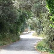 üppiges Grün auf dem Weg nach Paleochora
