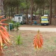 unser Platz am CP Bella Sardinia