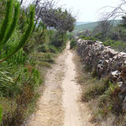 auf tollem Trail Richtung Rena Majore