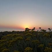 Sonnenuntergang Cala Domestica