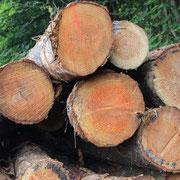 Holzherkunft 6