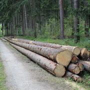 Holzherkunft 3
