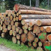 Holzherkunft 1